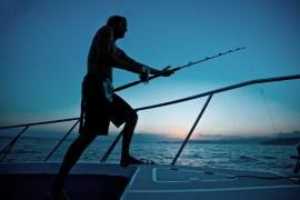 fishing v1 mfrzd 800k