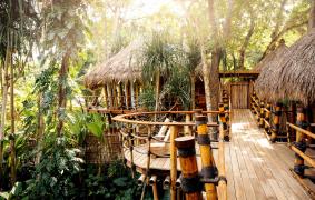 Mamole Tree Pathway by Read McKendree